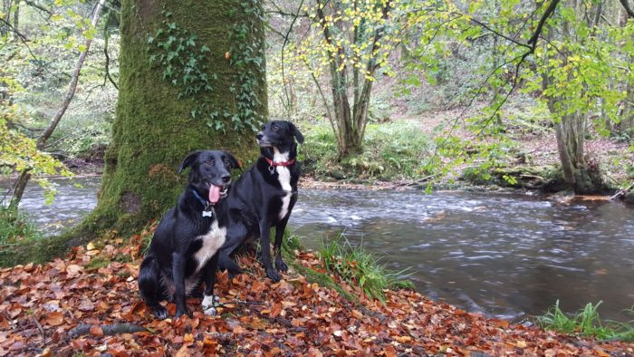 Two dogs in autumn